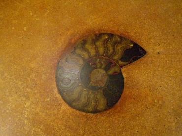 Fossil inlaid into concrete countertop